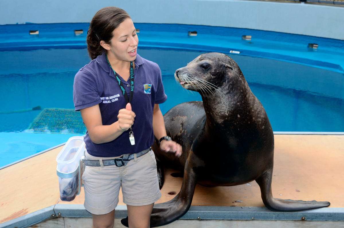 Animal Exhibits Department Volunteers New York Aquarium