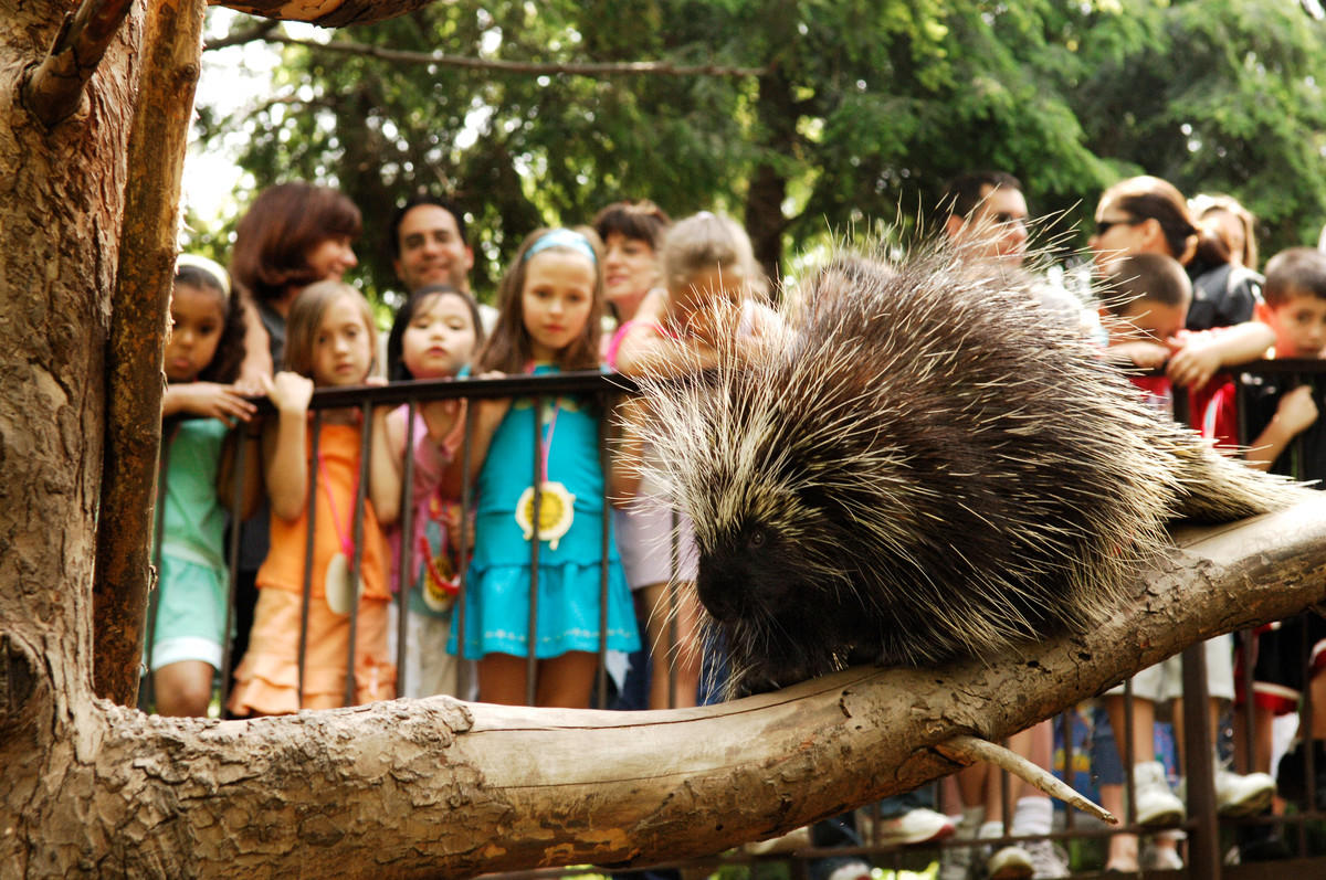 5p3e80xcnm julie larsen maher 2593 children visitors looking at a porcupine qz avi 05 31 06 hr