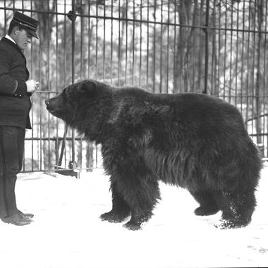 BZ Kodiak bear and keeper