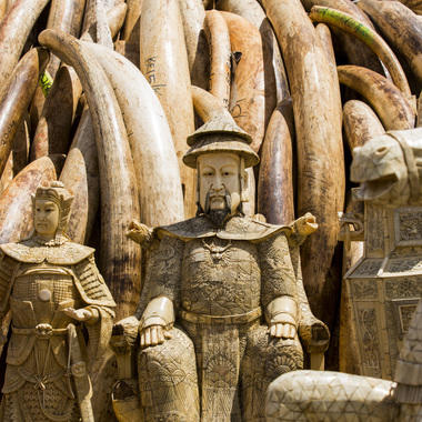 Ivory to be burned in Kenya