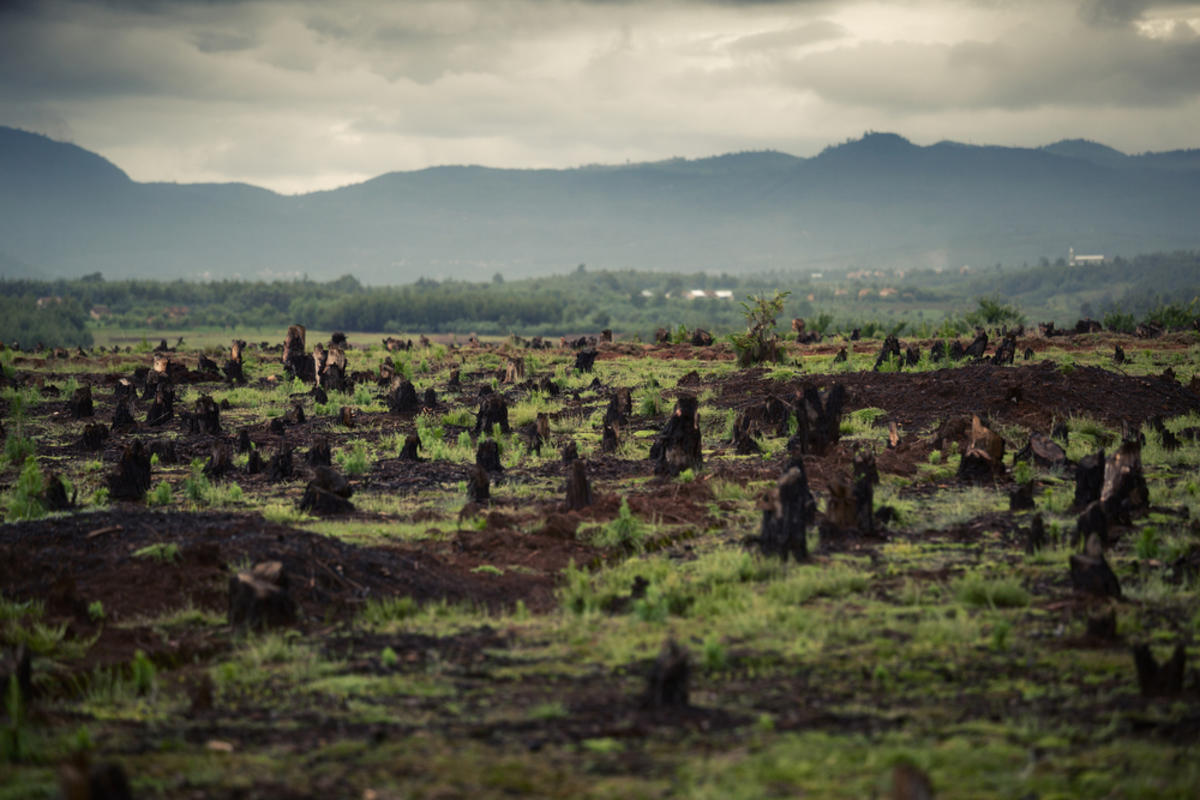 2ofh5r0xyb deforestation slash and burn madagascar