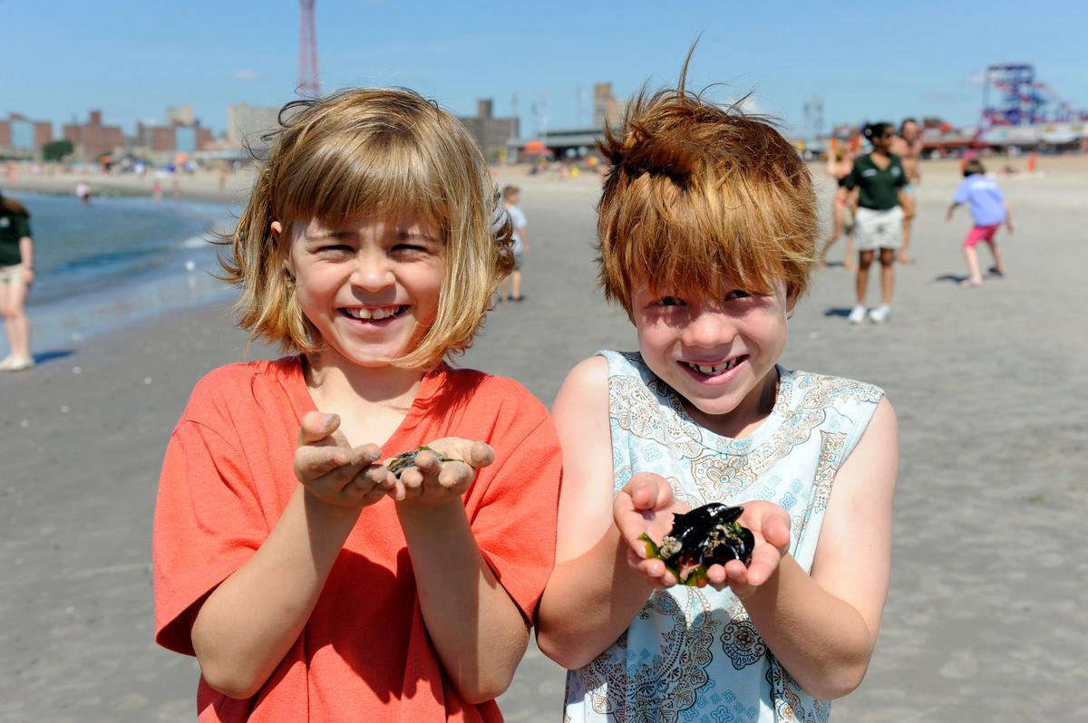 4gmpa7htqa julie larsen maher 5160 aquarium camp on beach aq 07 27 11