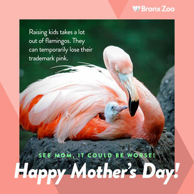 Mother's Day flamingo image share