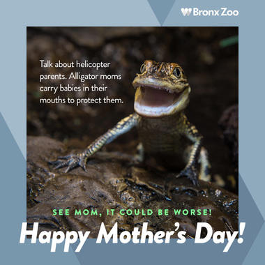 BZ Mother's Day alligator image share