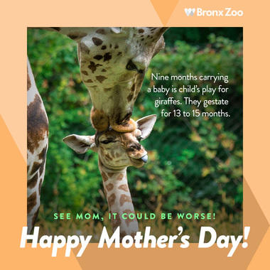 Mother's Day giraffe image share