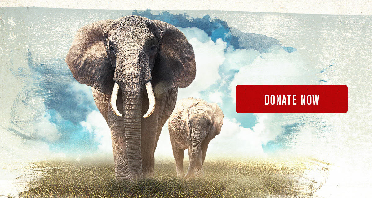 7dpt5q2dm3 email 10 days for elephants 96e action 10 0810 2017