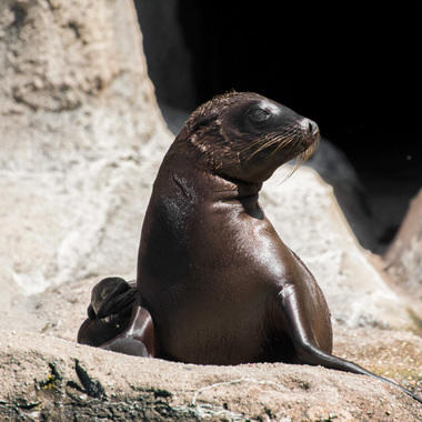 BZ Sea Lion pup 2