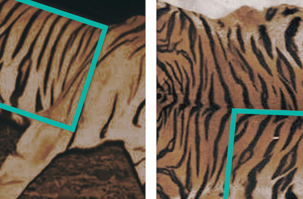1ydhmvhboo tiger comparison copy