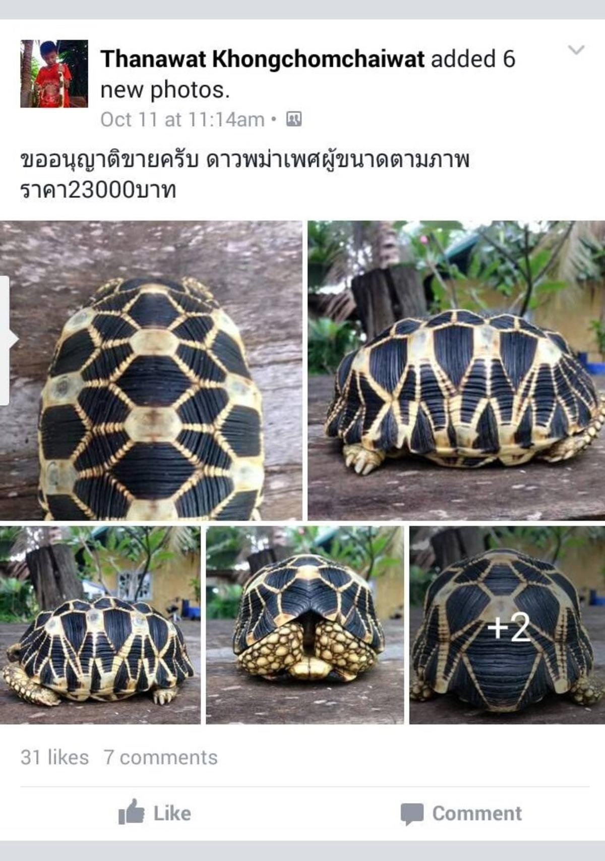 37u10wr3li 1. star tortoise facebook posting