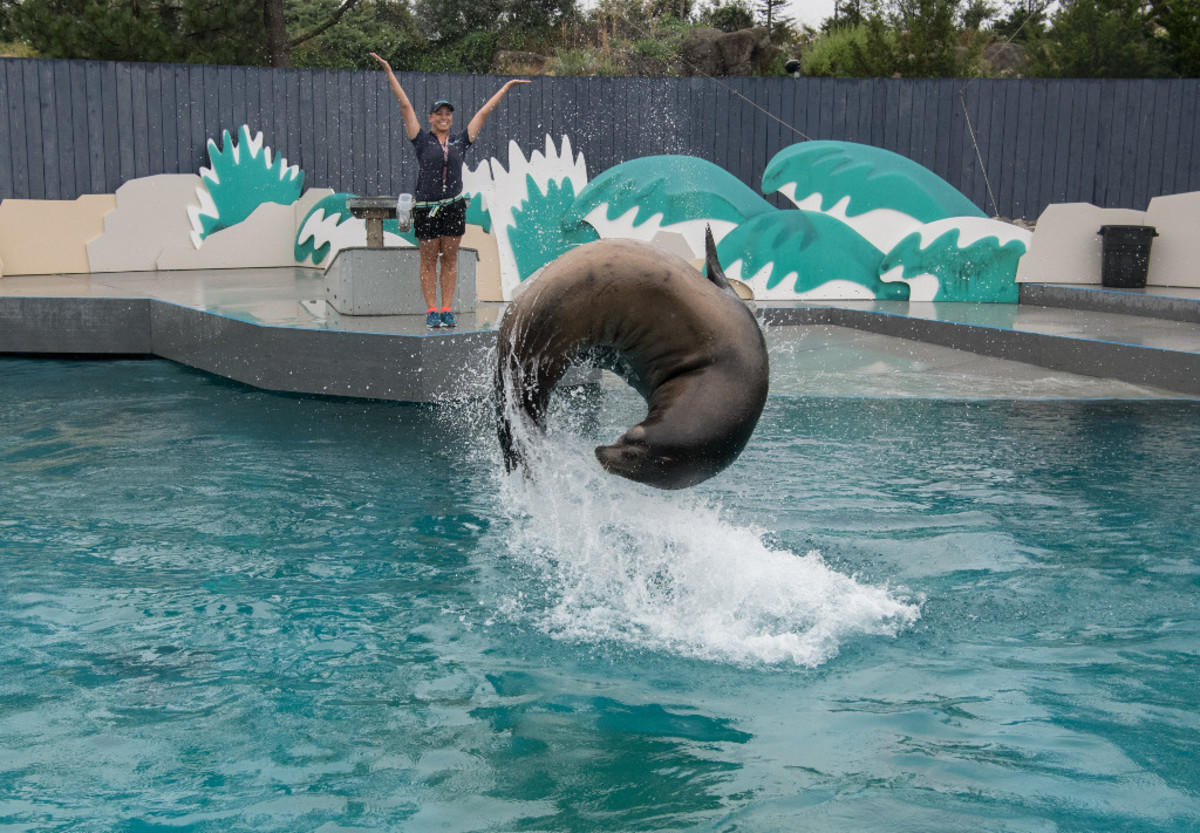 1eacfljdts julie larsen maher 3240 california sea lion aquatheater with trainers ath aq 07 14 17