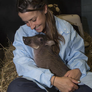 BZ The Zoo peaches piglet w/ Keeper