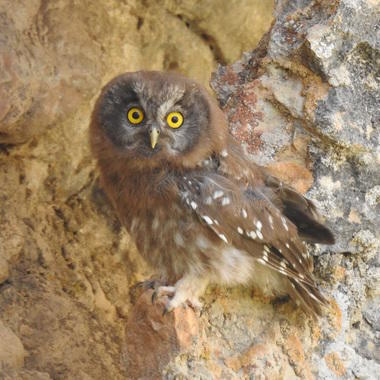 WCS 2019 top photos -- owl in Afghanistan