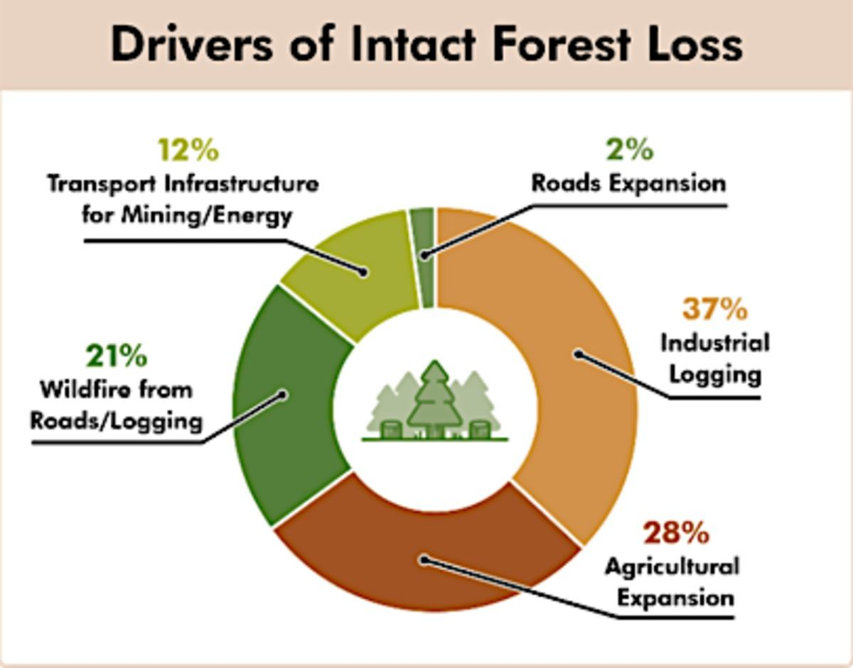 4oc9e27yhj forests graphic