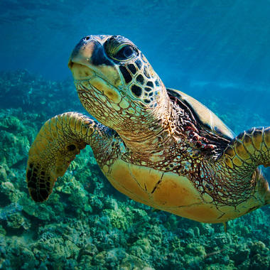 WCS Sea turtle hero for Get Involved