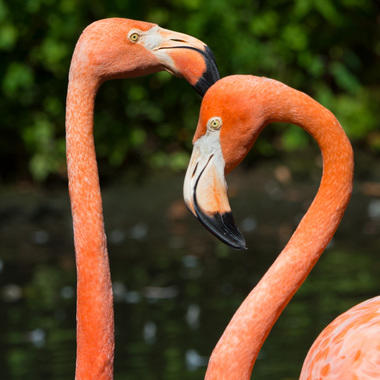 BZ Aquatic Bird House Tour: Caribbean Flamingos