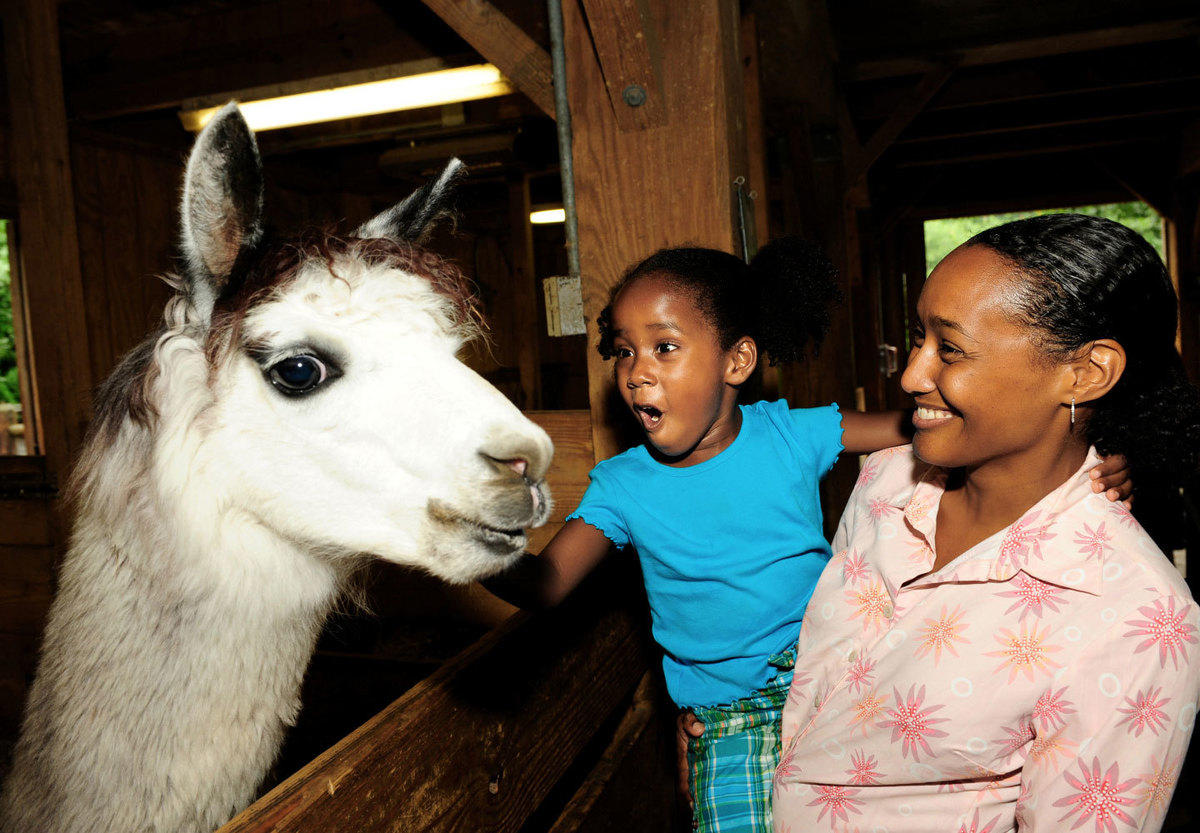 3is1hsumh3 julie larsen maher 1680 visitors with kids and llama bag ppz 07 21 09