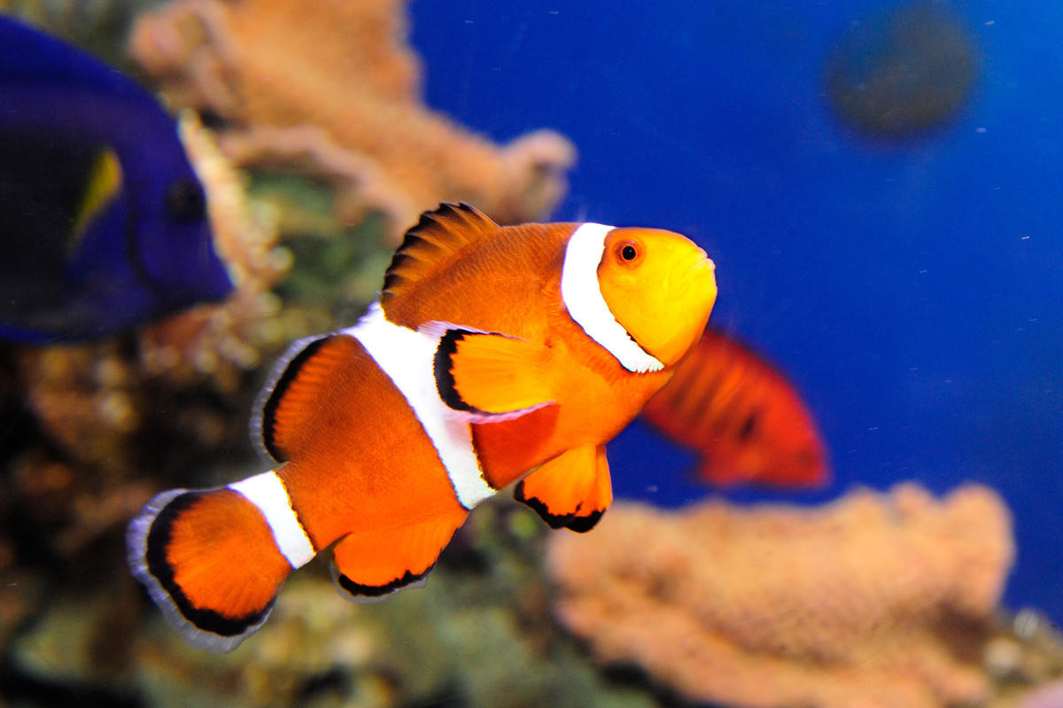 4jii0kmp9q julie larsen maher 6661 orange clownfish gr aq 05 05 10 hr